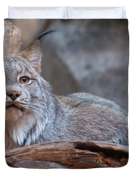 Duvet Cover featuring the photograph Canada Lynx by Bianca Nadeau
