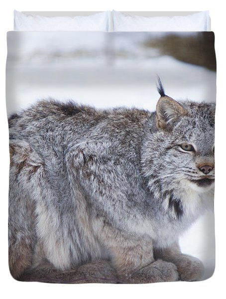 Canada Lynx Crouched On The Snowcovered Duvet Cover