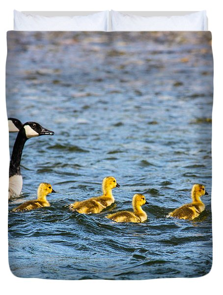 Canadian Geese And Goslings Duvet Cover by Omaste Witkowski