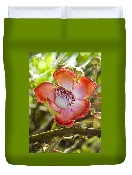 Cannonball Tree Flower Hawaii Duvet Cover by Venetia Featherstone-Witty