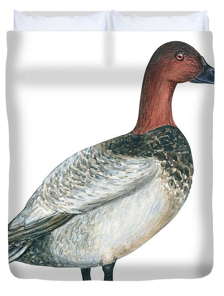 Canvasback Duck  Duvet Cover by Anonymous