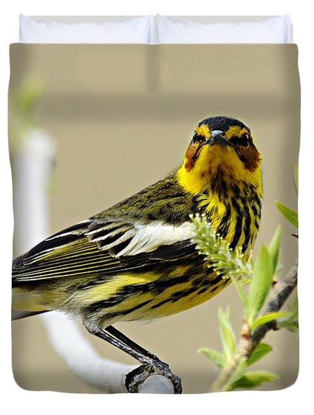 Cape May Warbler Duvet Cover by Larry Ricker