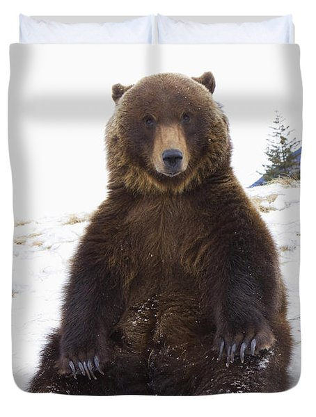 Captive Grizzly During Winter Sits Duvet Cover by Doug Lindstrand
