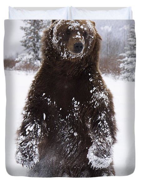Captive Grizzly Stands On Hind Feet Duvet Cover by Doug Lindstrand