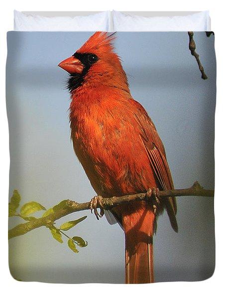 Cardinal 329 Duvet Cover