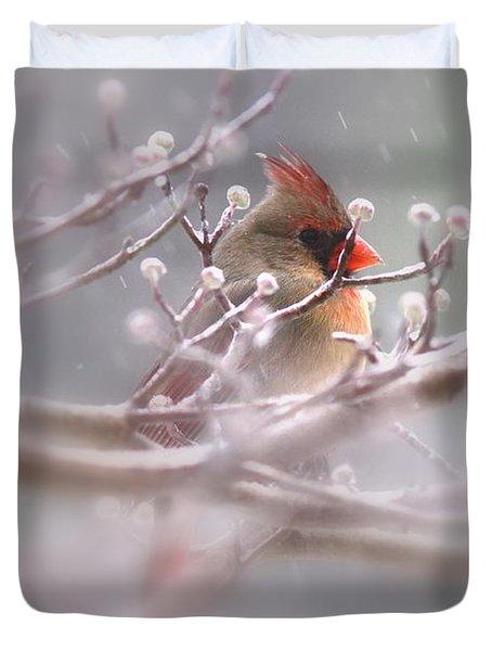 Cardinal - Bird - Lady In The Rain Duvet Cover by Travis Truelove