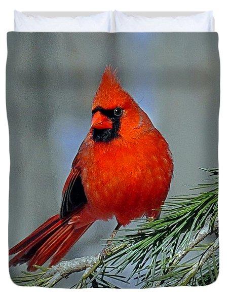 Cardinal In An Evergreen Duvet Cover
