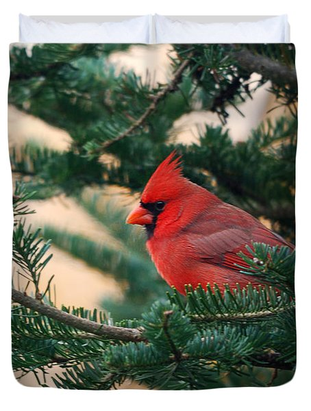 Cardinal In Balsam Duvet Cover by Susan Capuano