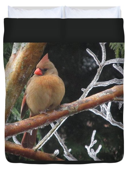 Duvet Cover featuring the photograph Cardinal by Marilyn Zalatan