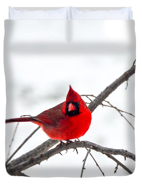 Cardinal On A Branch  Duvet Cover by Mary Carol Story