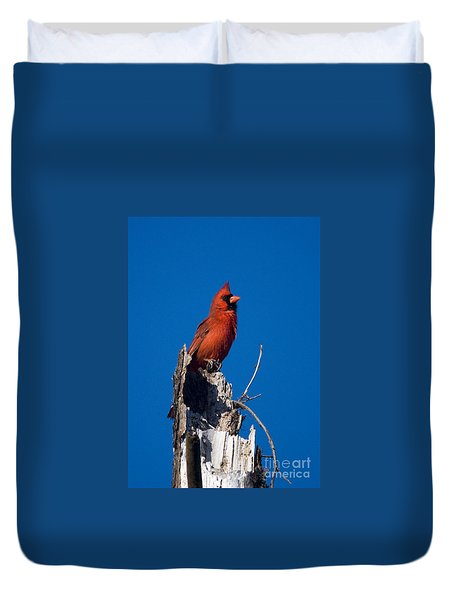 Cardinal On Honeymoon Island Duvet Cover