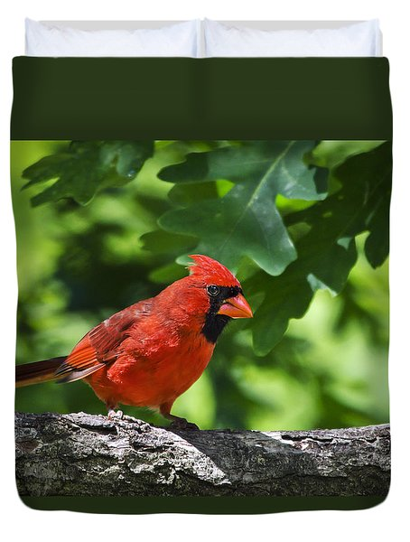 Cardinal Red Duvet Cover by Christina Rollo