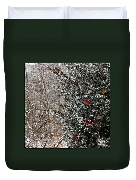 Cardinals In Winter 1 Square Duvet Cover