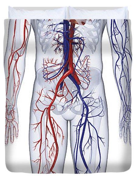 Cardiovascular System, Human Body Duvet Cover