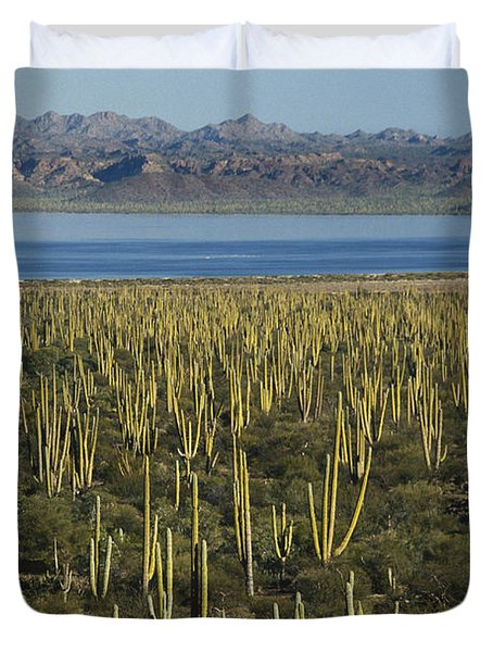 Cardon Cacti In Mexico Duvet Cover