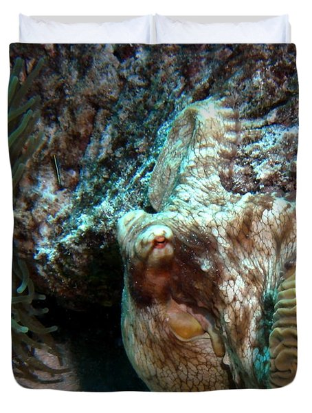 Duvet Cover featuring the photograph Caribbean Reef Octopus Next To Green Anemone by Amy McDaniel