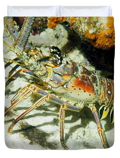 Duvet Cover featuring the photograph Caribbean Spiny Reef Lobster  by Amy McDaniel