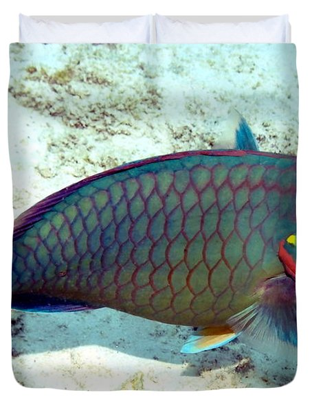 Duvet Cover featuring the photograph Caribbean Stoplight Parrot Fish In Rainbow Colors by Amy McDaniel