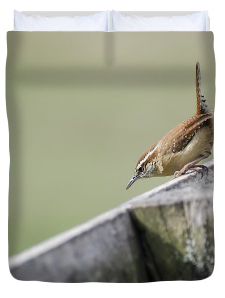 Carolina Wren Two Duvet Cover by Heather Applegate