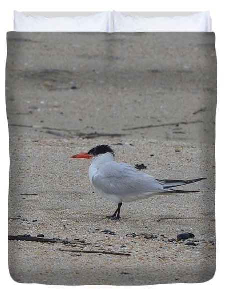 Duvet Cover featuring the photograph Caspian Tern by James Petersen