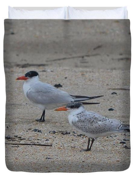 Duvet Cover featuring the photograph Caspian Tern Young And Adult by James Petersen