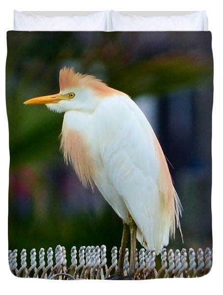 Cattle Egret Breeding Plumage Duvet Cover by Debra Martz