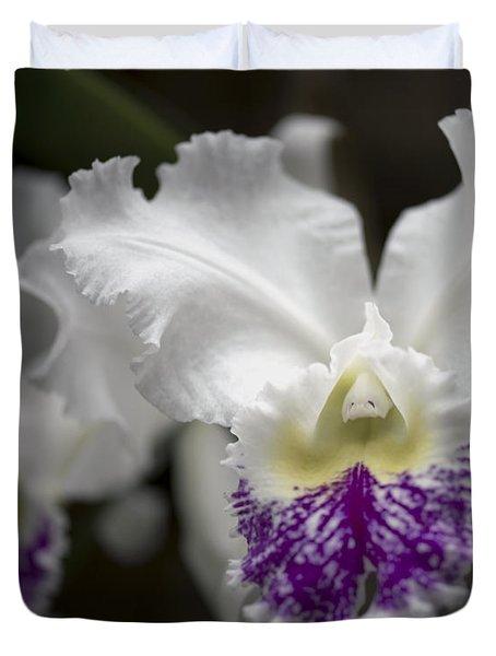 Cattleya Catherine Patterson Full Bloom Duvet Cover by Terri Winkler