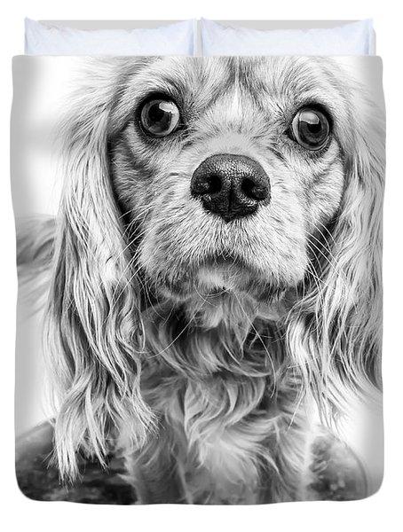 Cavalier King Charles Spaniel Puppy Dog Portrait Duvet Cover