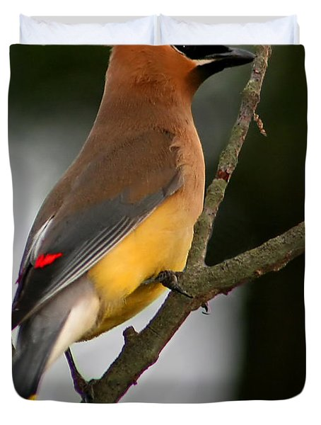 Cedar Wax Wing II Duvet Cover by Roger Becker