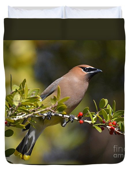 Duvet Cover featuring the photograph Cedar Waxwing And Red Berries by Kathy Baccari