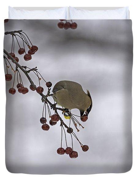 Cedar Waxwing Eating Berries 1 Duvet Cover