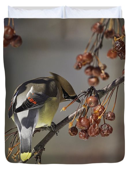 Cedar Waxwing Eating Berries 7 Duvet Cover