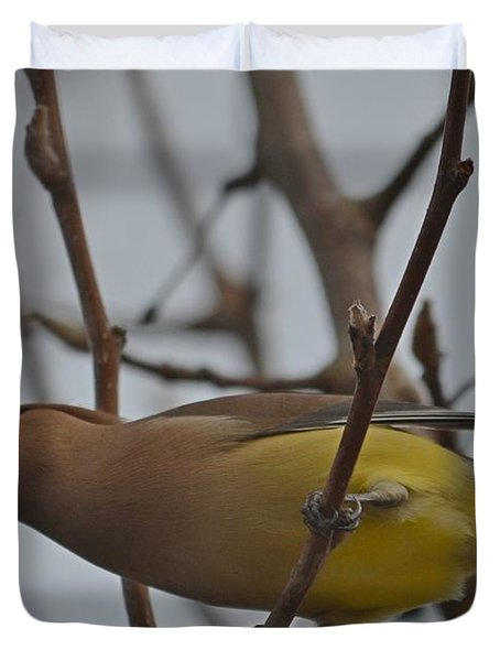 Cedar Waxwing Feasting In Foggy Cherry Tree Duvet Cover by Jeff at JSJ Photography