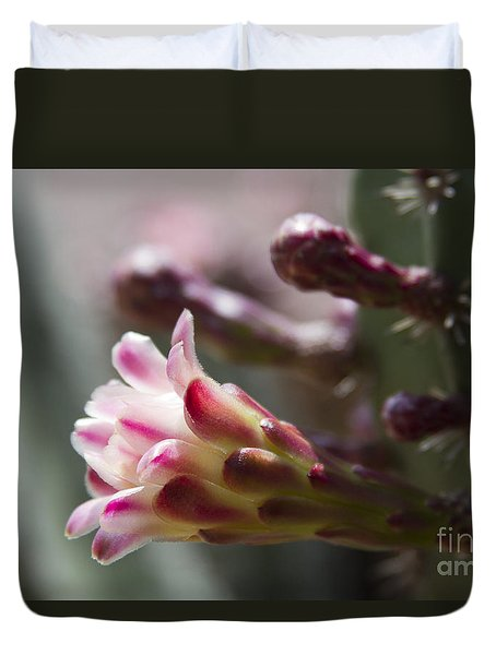 Cereus Hexagonus Pink Duvet Cover by Sharon Mau