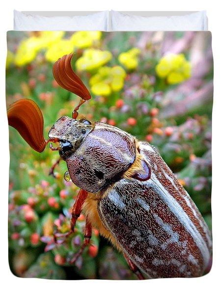 Chafer Beetle On Medusa Succulent 2 Duvet Cover