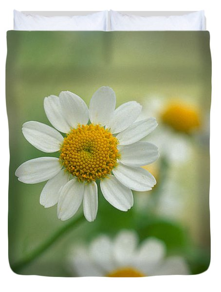 Chamomile Duvet Cover by Kathy Yates