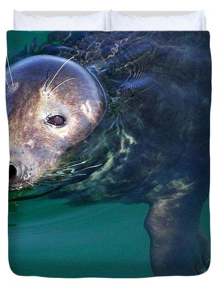Chatham Harbor Seal Duvet Cover