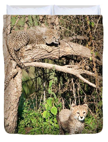 Cheetah Cubs Acinonyx Jubatus Climbing Duvet Cover