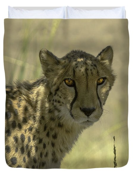 Cheetah Gaze Duvet Cover by LeeAnn McLaneGoetz McLaneGoetzStudioLLCcom