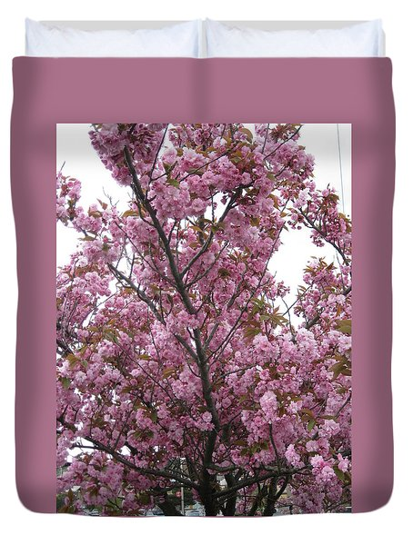 Cherry Blossoms 2 Duvet Cover by David Trotter