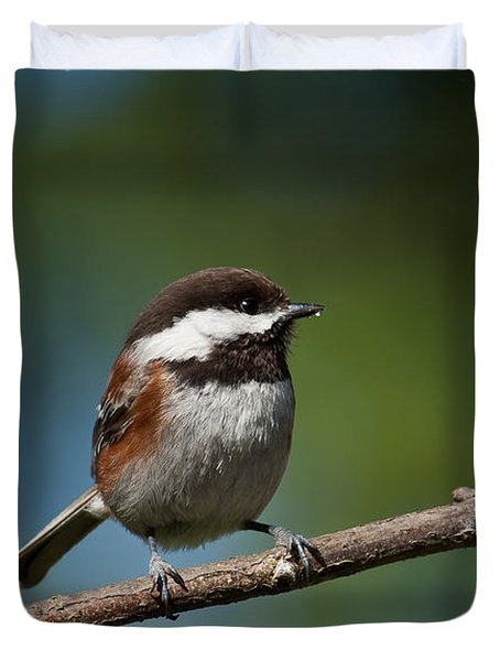 Chestnut Backed Chickadee Perched On A Branch Duvet Cover