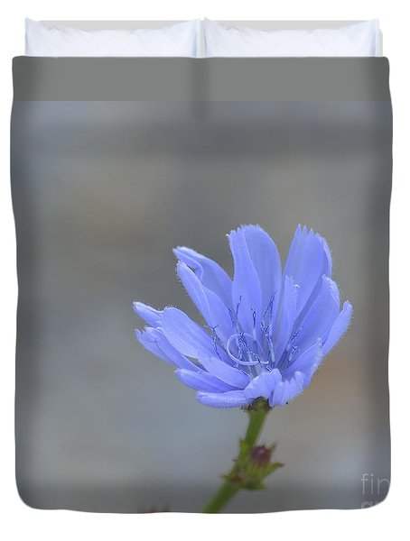 Chicory Duvet Cover by Randy Bodkins