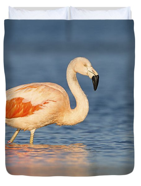 Chilean Flamingo Duvet Cover by Ronald Kamphius