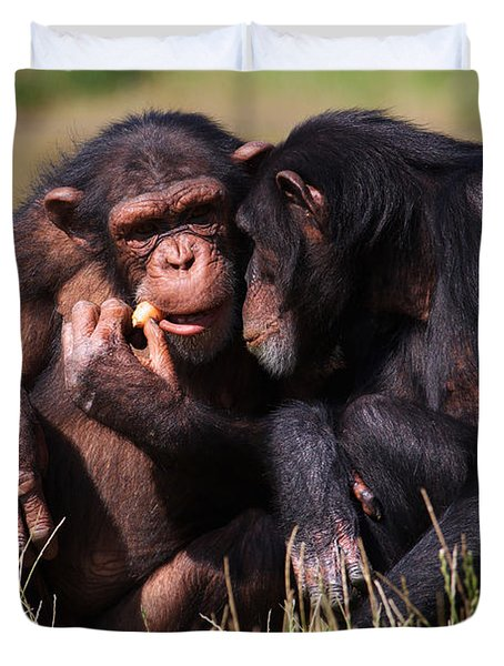Duvet Cover featuring the photograph Chimpanzees Eating A Carrot by Nick  Biemans