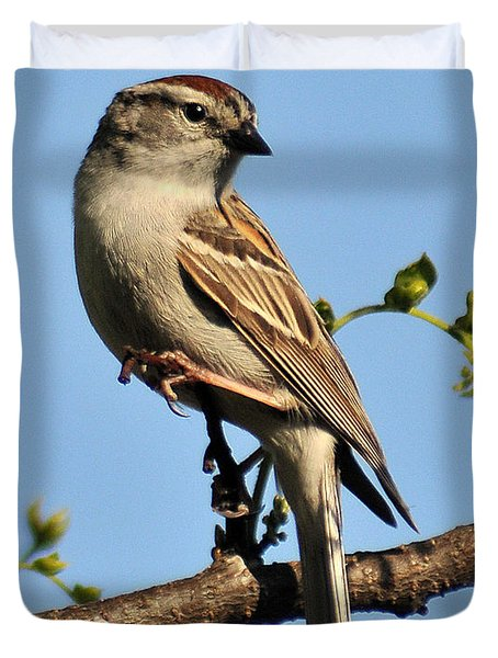 Chipping Sparrow 246 Duvet Cover