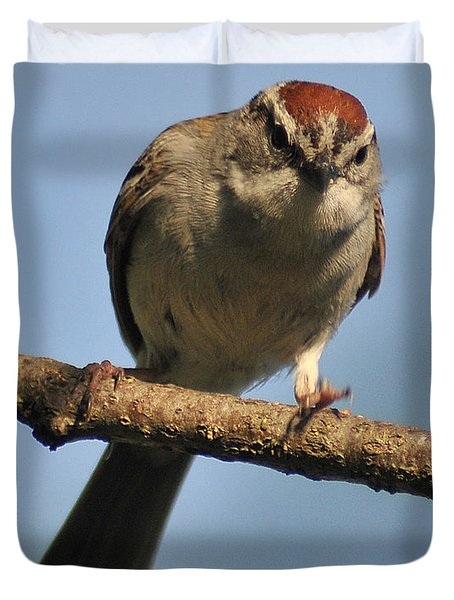 Chipping Sparrow 265 Duvet Cover