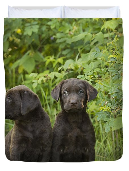 Chocolate Labrador Retriever Puppies Duvet Cover by Linda Freshwaters Arndt