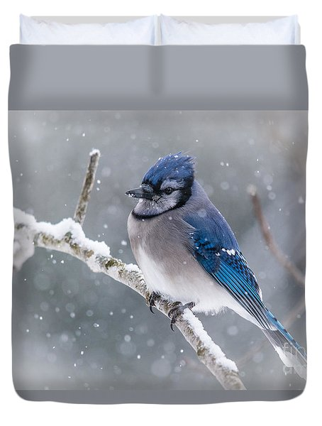 Christmas Card Bluejay Duvet Cover