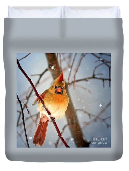 Northern Cardinal Snow Scene Duvet Cover by Nava Thompson