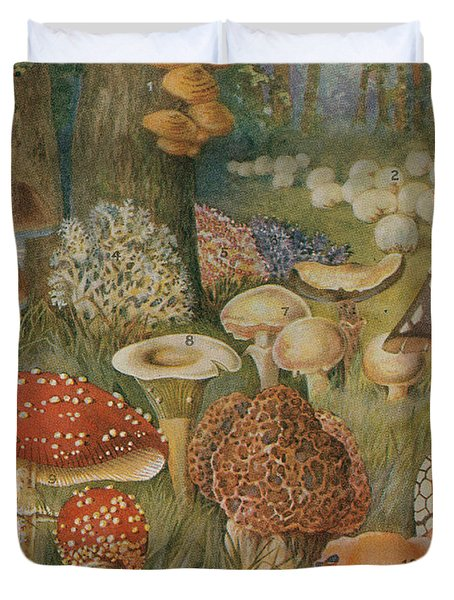 Citizens Of The Land Of Mushrooms Duvet Cover by Science Source